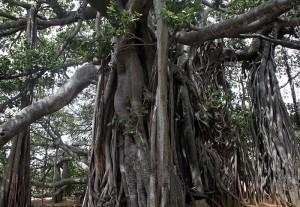 2014-06jun-23-nithyananda-diary-209_IMG_0261_bidadi-temple_1